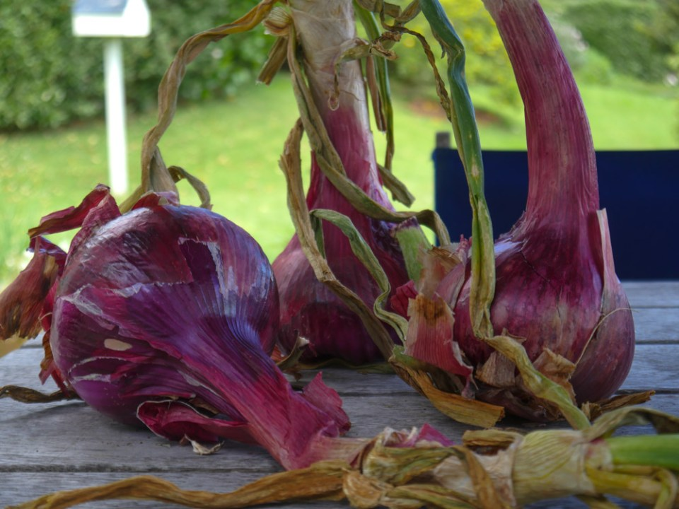 Californian-red-onions-1100525