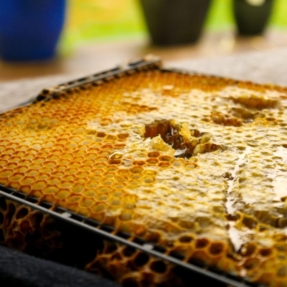 honey-frame-1110989