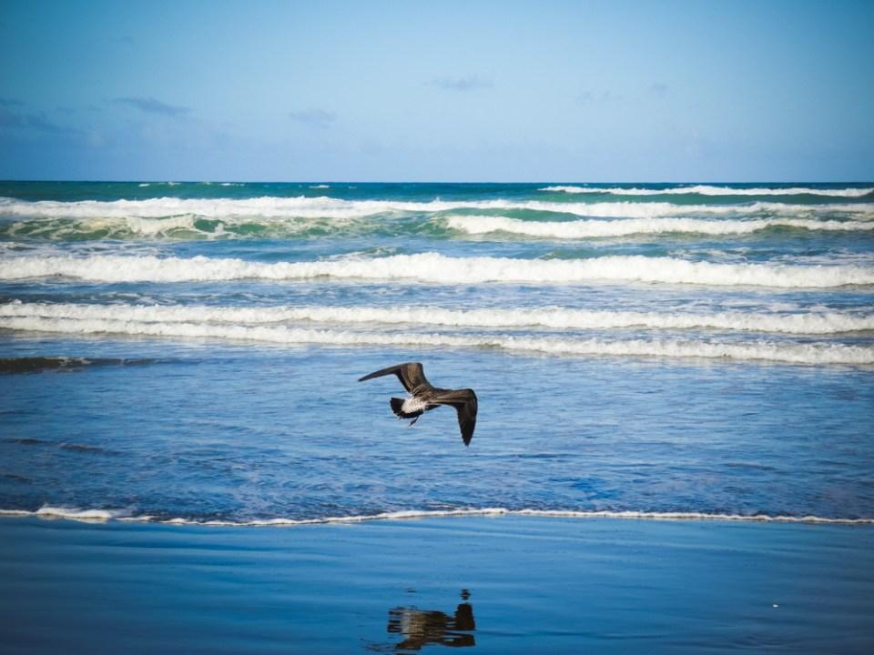 the beach-1120173