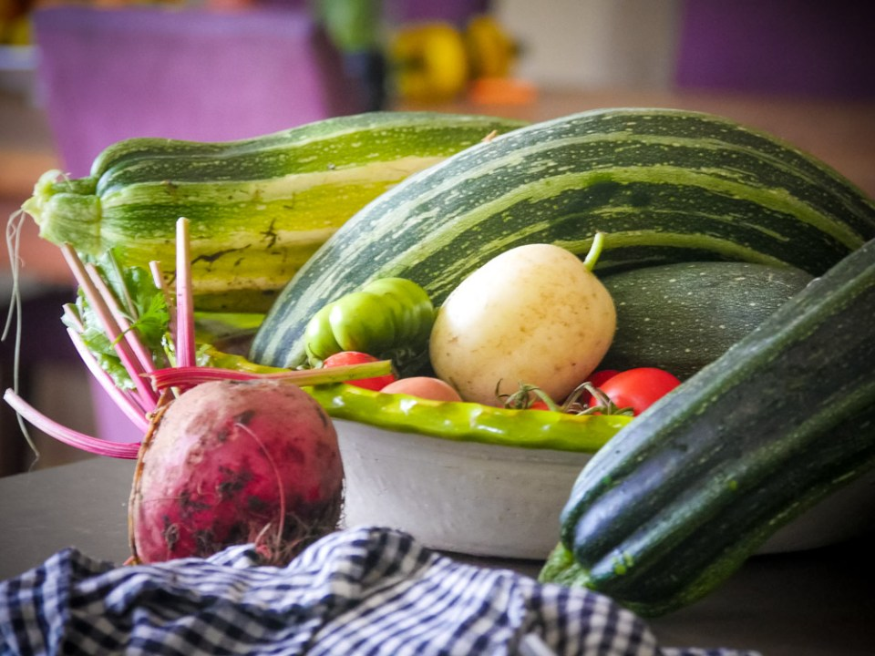 zucchini-1120086