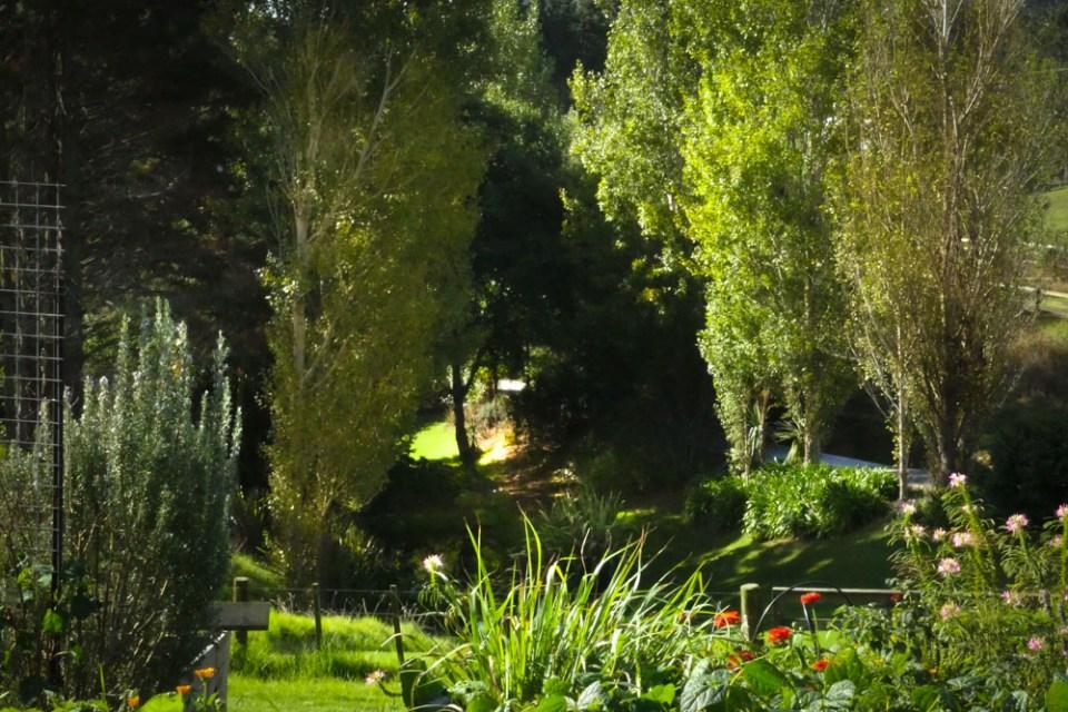 veg garden - frog pond-1130829