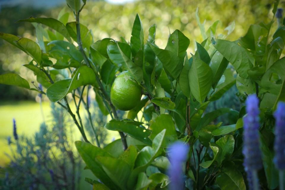 grapefruit-1140069