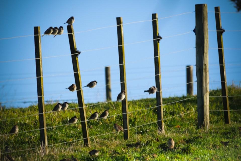 sparrows-1150898