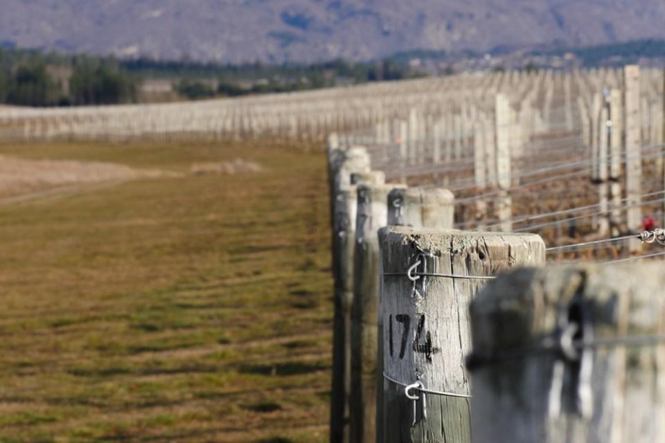 MacArthurs Ridge - Vines-1160751