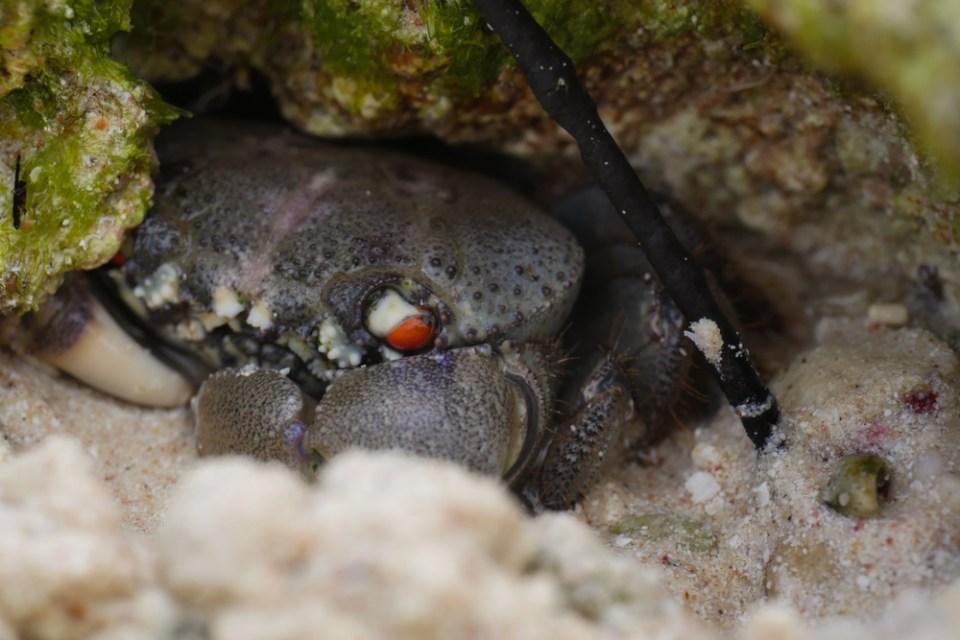 crab-1170763