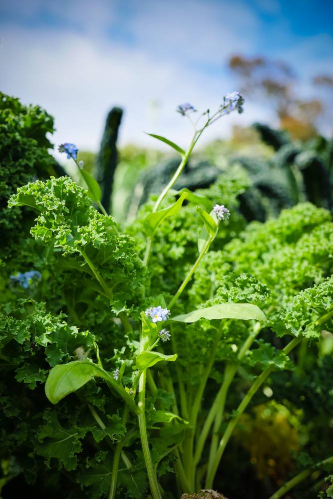 kale happiness-1180969