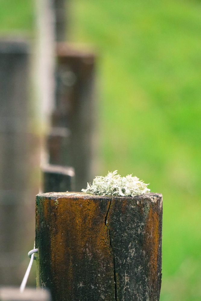 lichen fence post-1180844