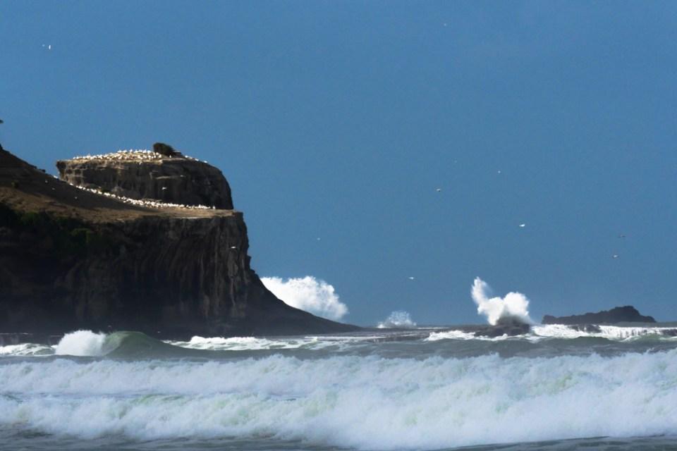 Muriwai beach-1190215