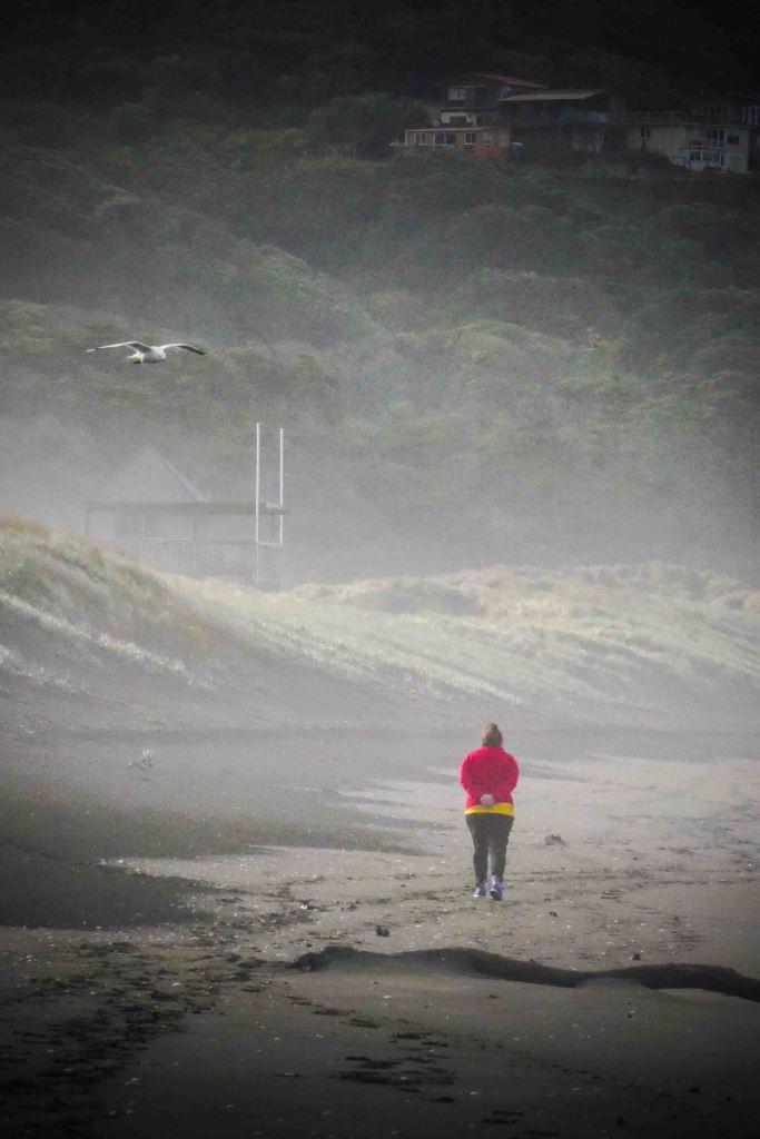 seagull beach walk-1190946