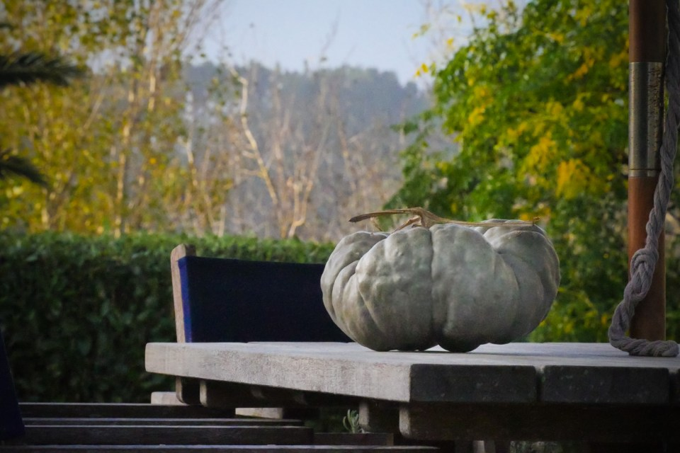 my rather large pumpkin-1250045