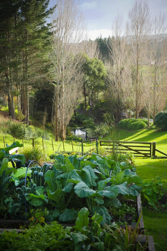 veg_garden-1250799