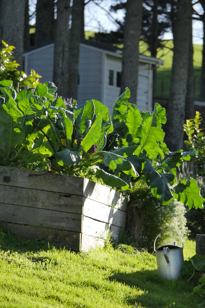hillside garden-1260286