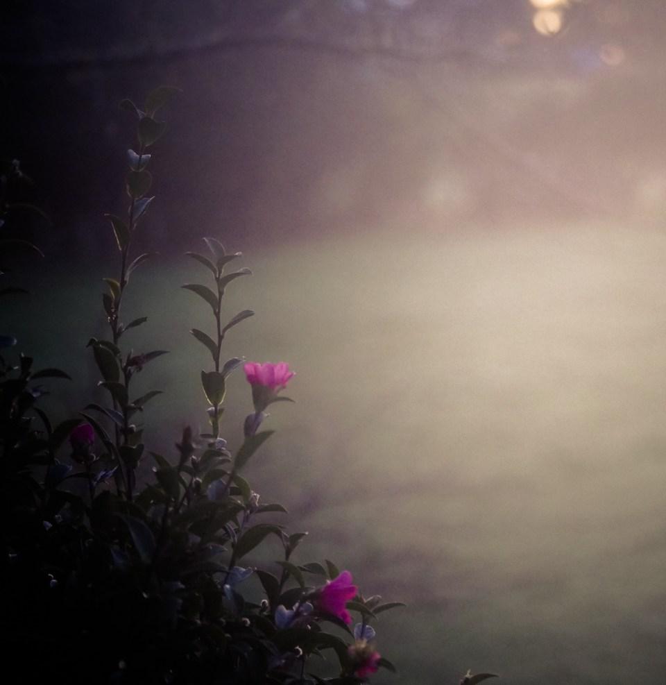 morning mist-1260049