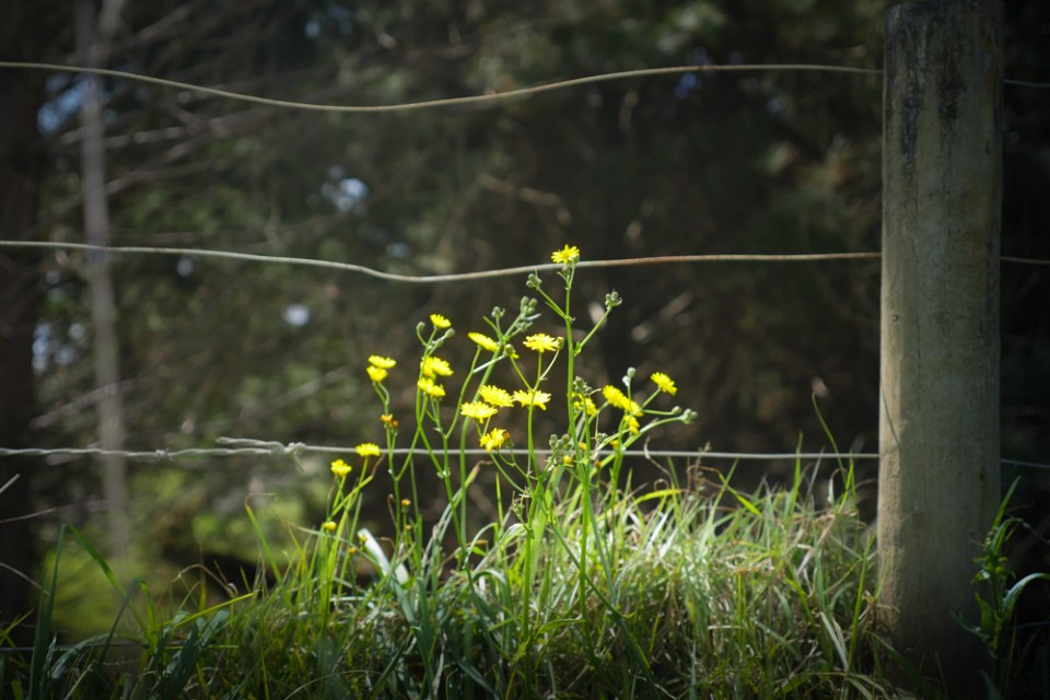 weeds-1270596