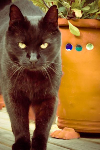 eric-black-cat-1280170