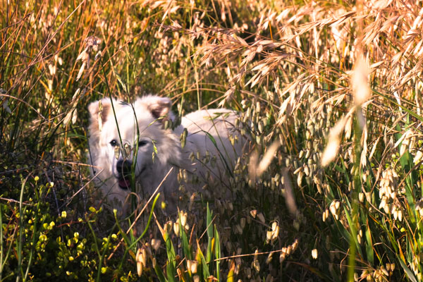 walks-with-the-pooch-1280210