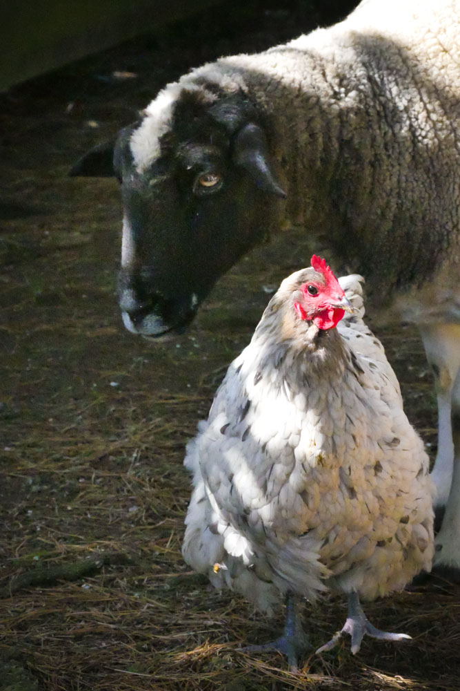 farm-pals-1280956