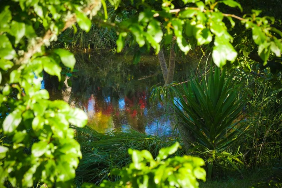 canna-reflections-1290315