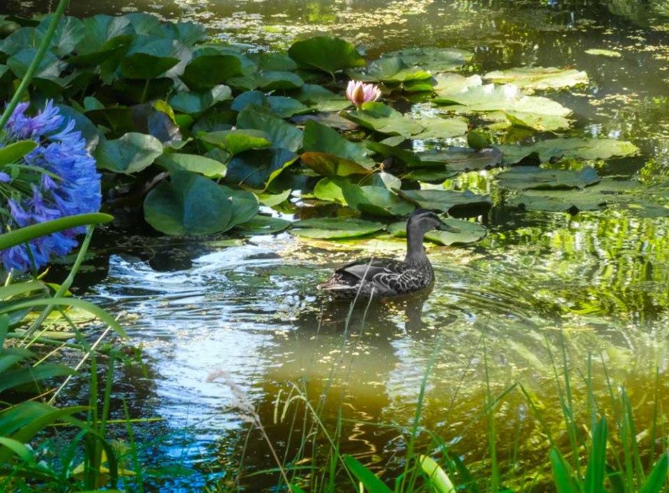 frog_pond_farm-1290557