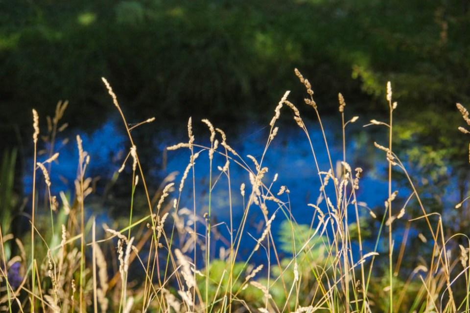 frog_pond_farm-1290565