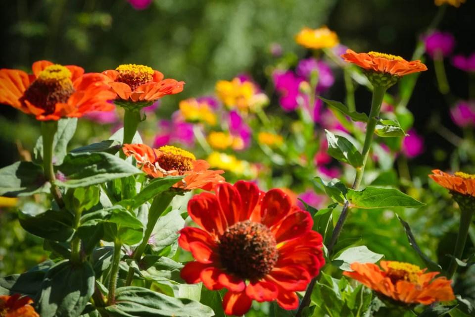 veg_garden-1290495