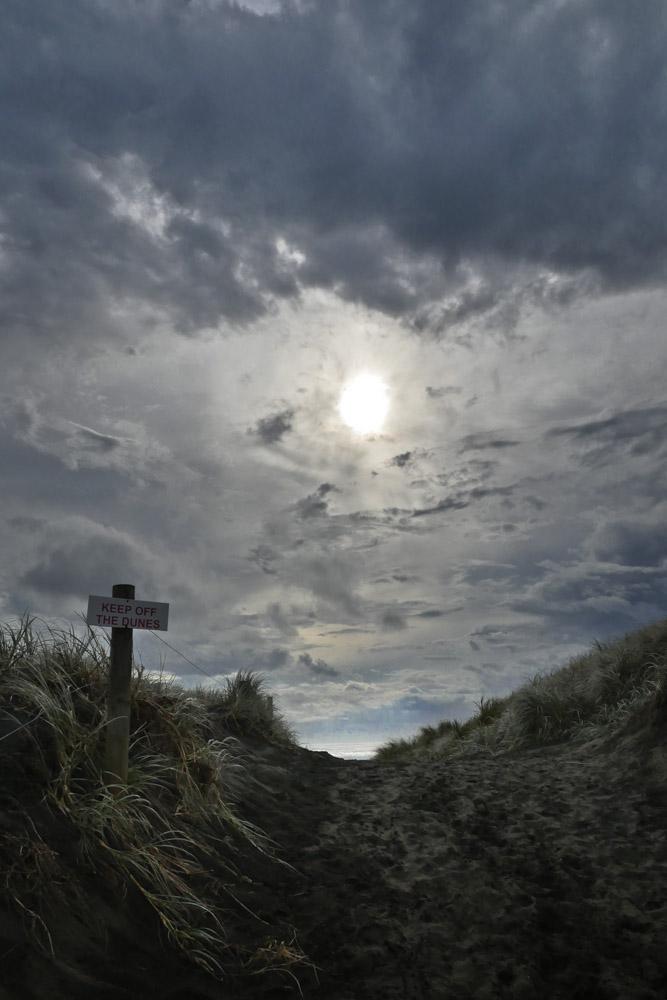 seaweed-muriwai-beach