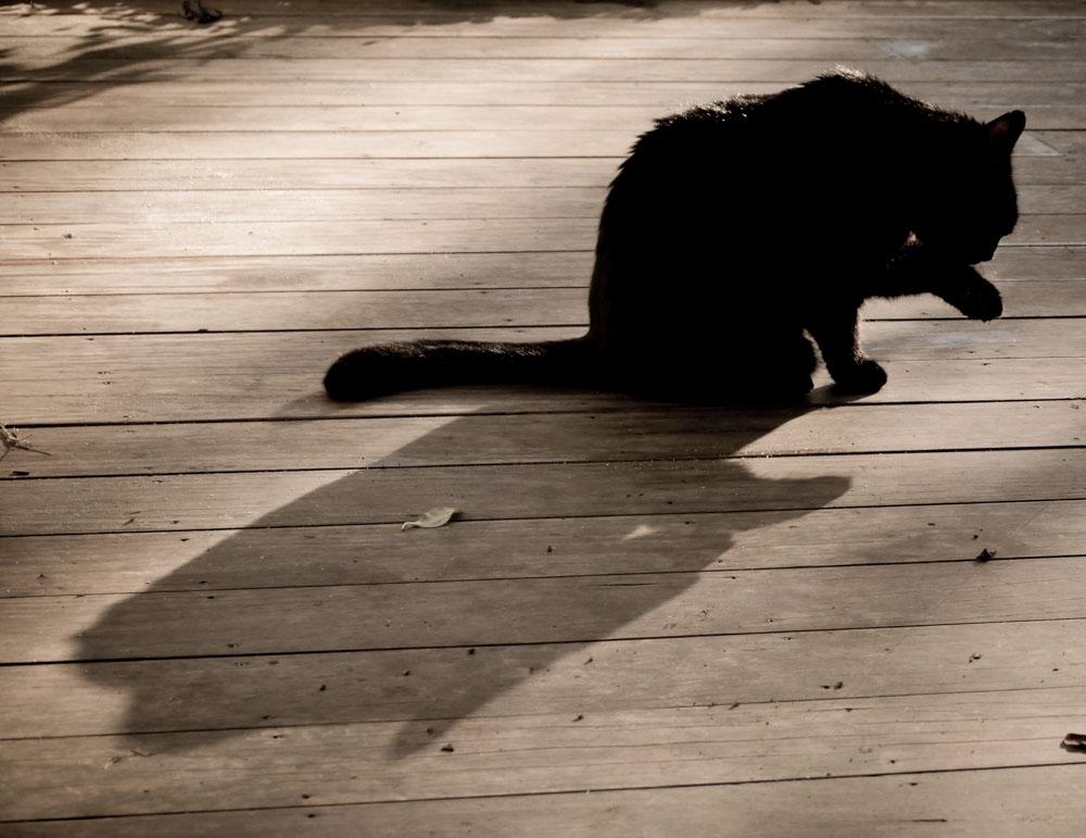 black cat grooming