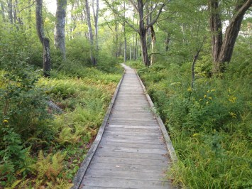 Boarwalk, Laudholm Nature Preserve, Wells, Maine