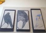 Decorative tiles, work in progress; ravens, bluejay; sgraffito on stoneware