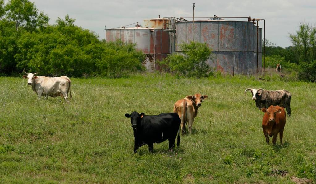 Oil and Gas Wells Lingering in the Cattle Ranch