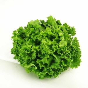 салад  фризэ кудрявый зеленый