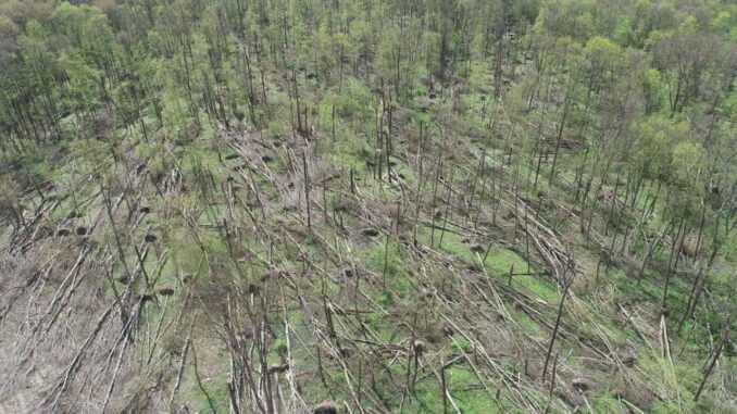 На Житомирщині буревій понищив 20 гектарів лісу