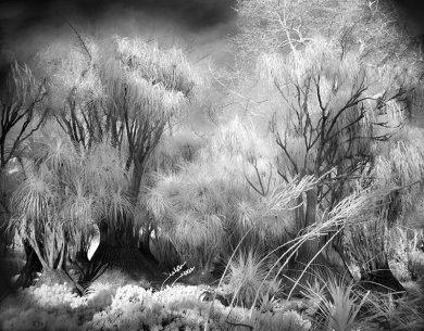 Garden-Trees,medium_large.1376195783