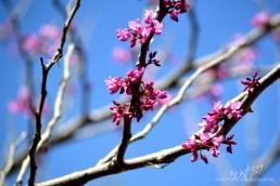 blossom_final_11