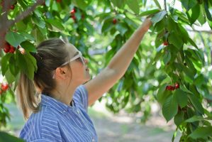 cherry picking from addict 2 advocate marilyn l davis