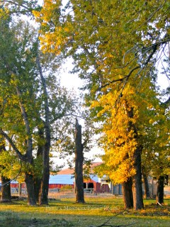 October~ From a Montana Front Porch
