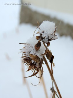 Winter Flowers ~ From a Montana Front Porch