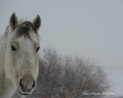 Winter Horse ~ From a Montana Front Porch