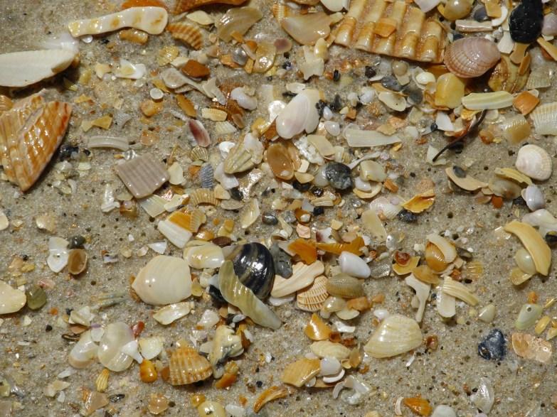 Shattered sea shells on a beach