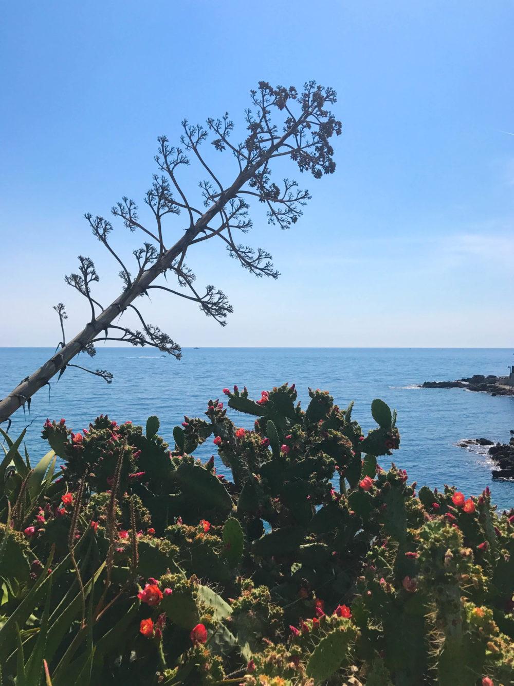 garoupe-cap-dantibes-sentier-du-littoral-e1497946695713