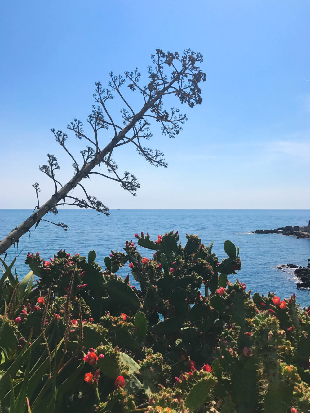 cap d'antibes sentier du littoral