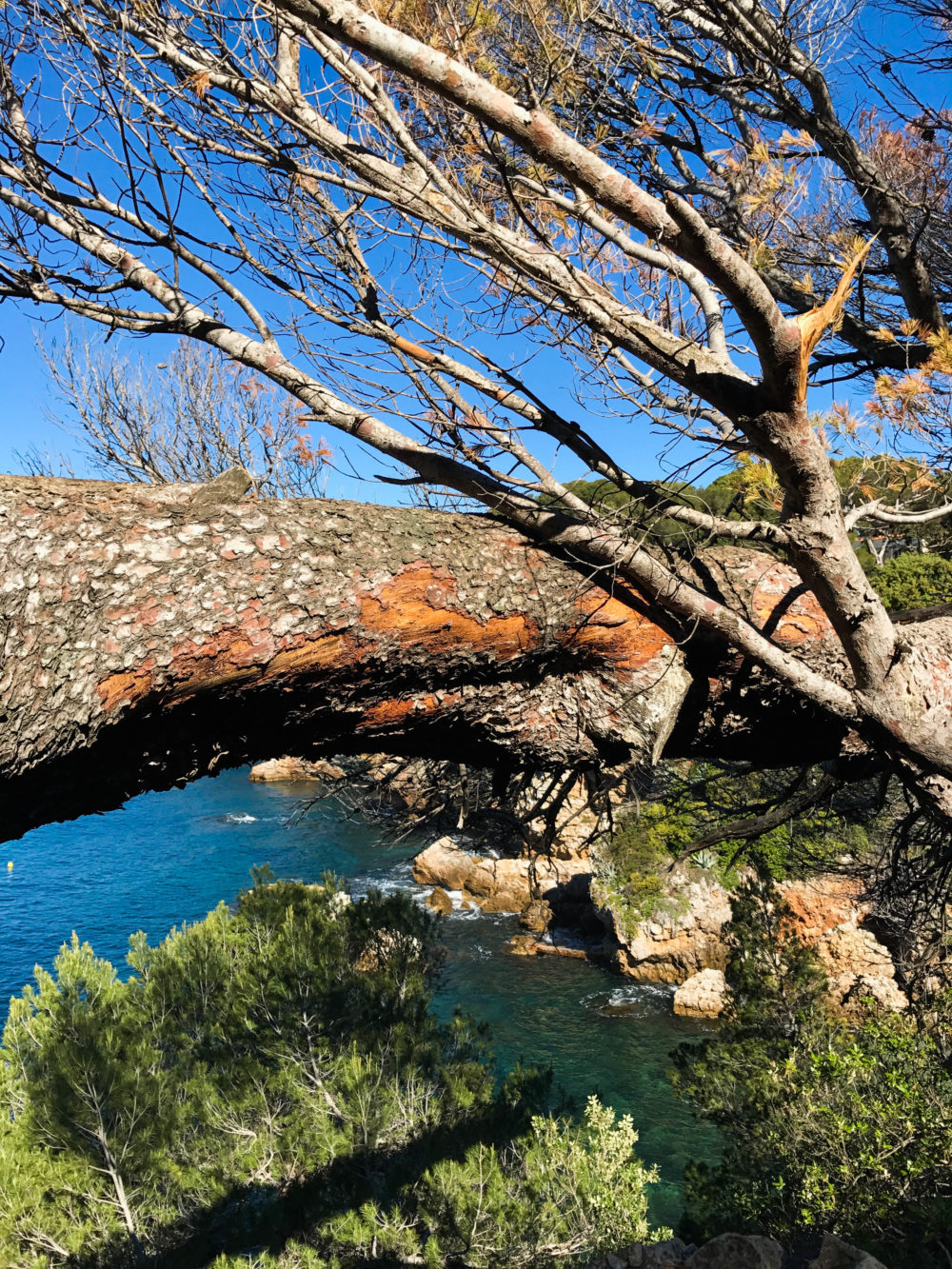 nature cap d'antibes sentier du littoral