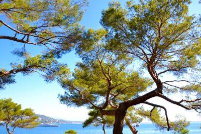Îles de Lérins sainte marguerite7