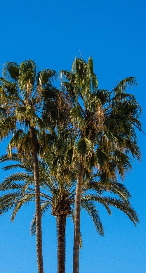 palmiers-côte-dazur-e1515583597122