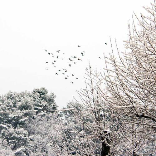 La-Côte-dAzur-sous-la-neige-février-2018