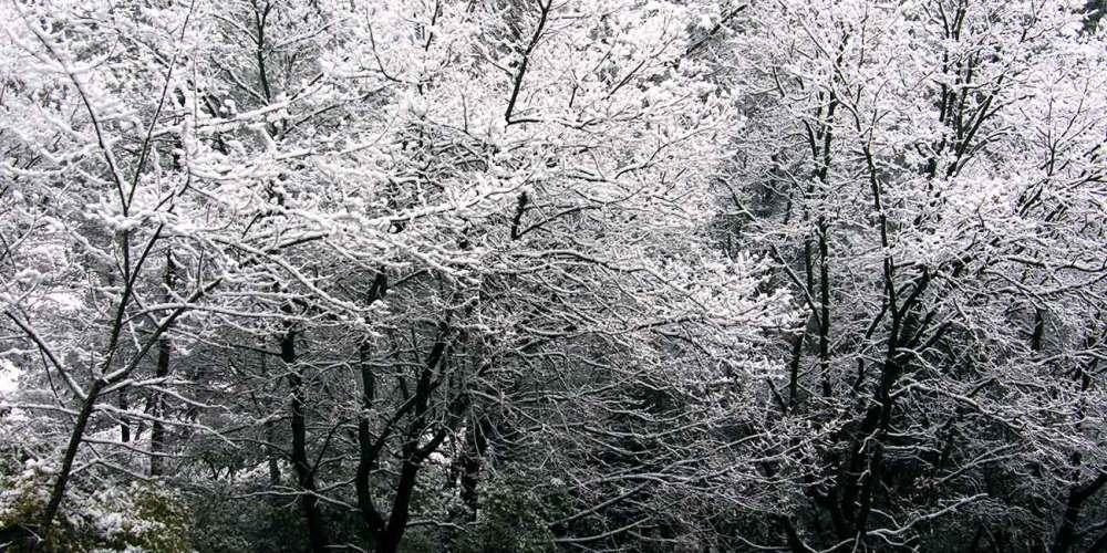neige-arbre-biot-sophia-antipolis-cote-dazur-fevrier-2018
