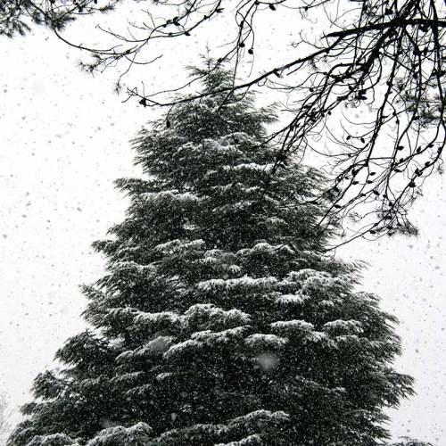 sapin-neige-sophia-nice-cote-dazur-fevrier-2018
