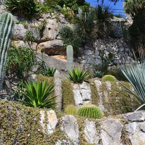 plantes-exotiques-jardin-eze-cote-dazur