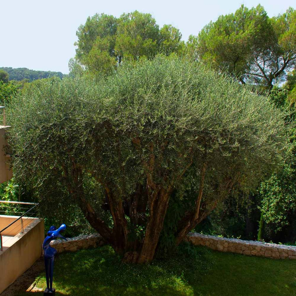 olivier-le-mas-candille