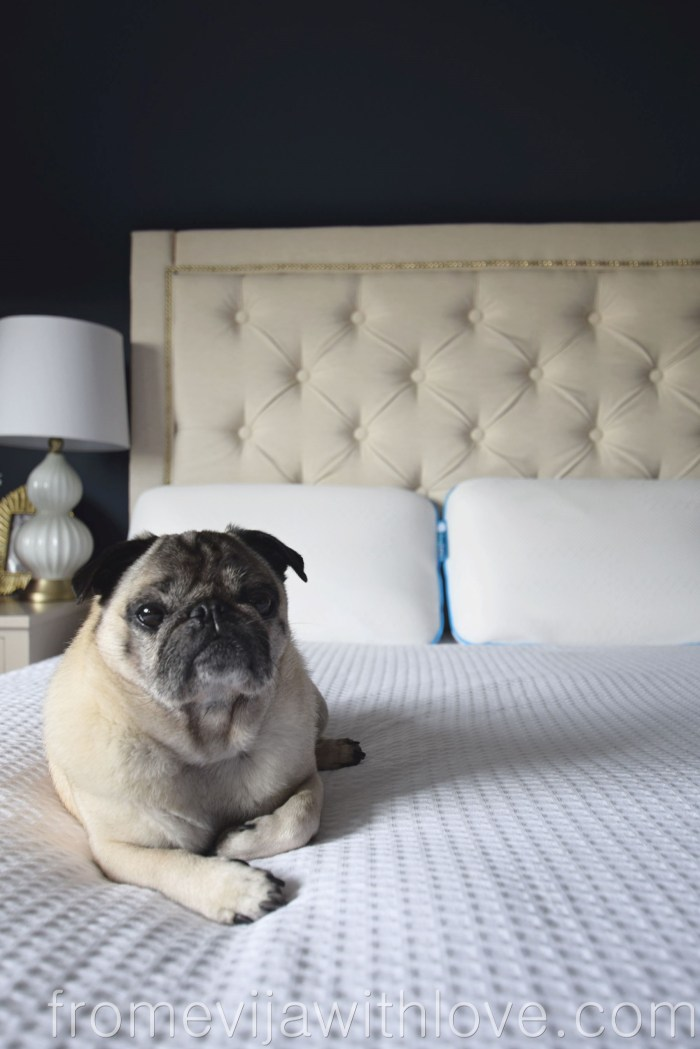 Sleepbear Luxurious Natural Talalay Latex Pillow and pug